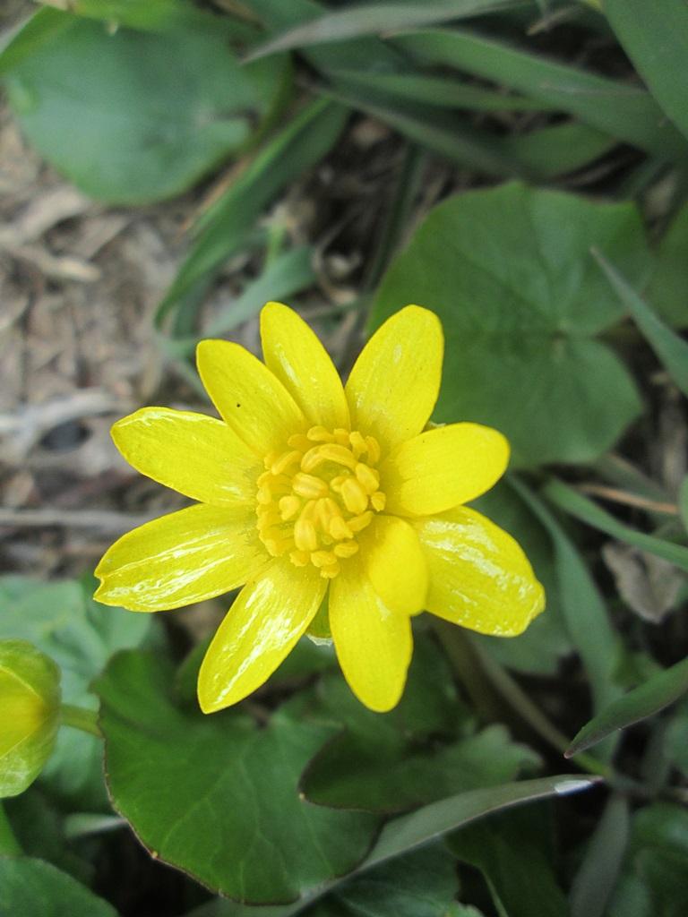 весенние цветы фото 1 (4)