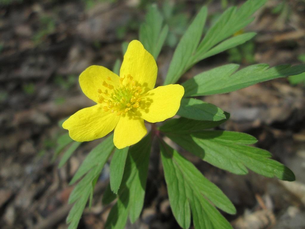 весенние цветы фото (11)