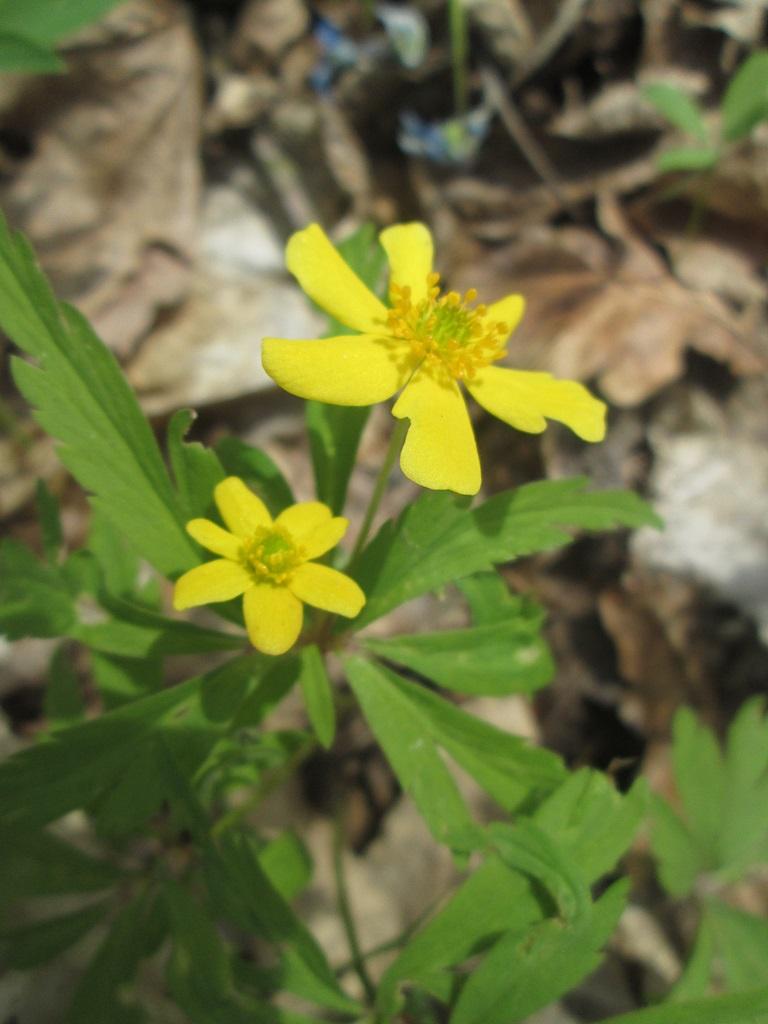 весенние цветы фото 2 (3)