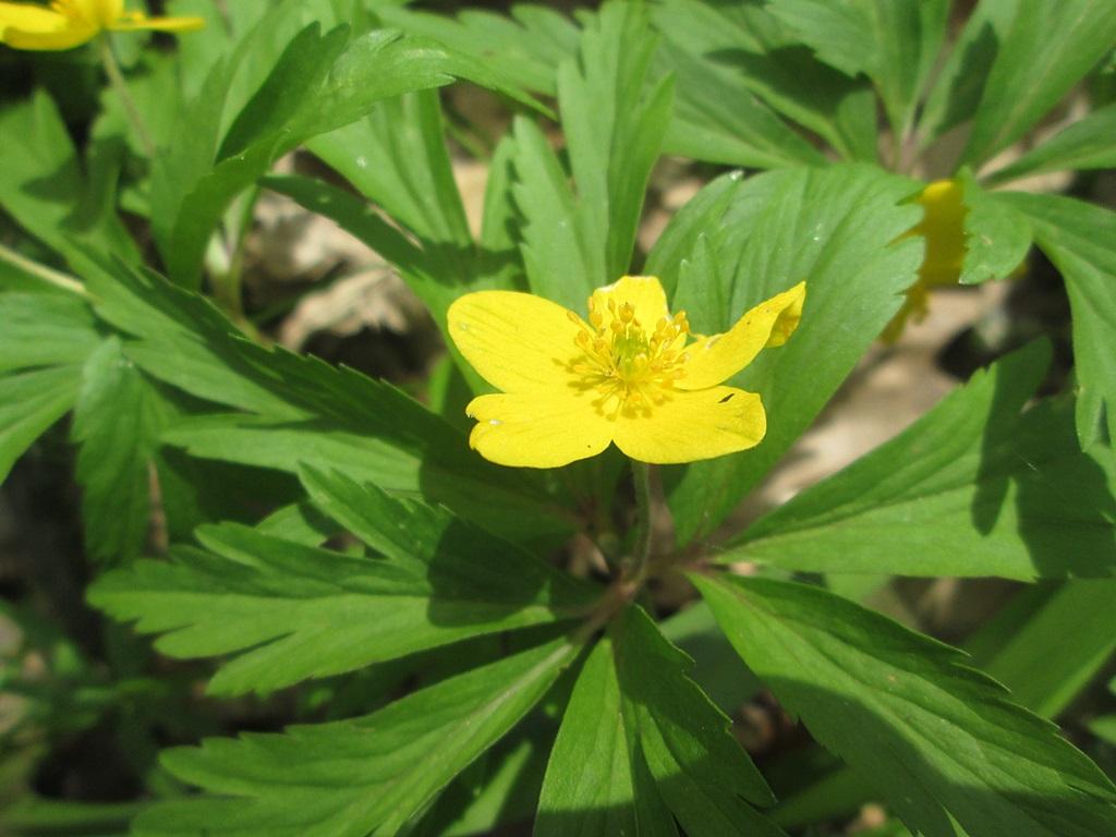 весенние цветы фото 3 (1)