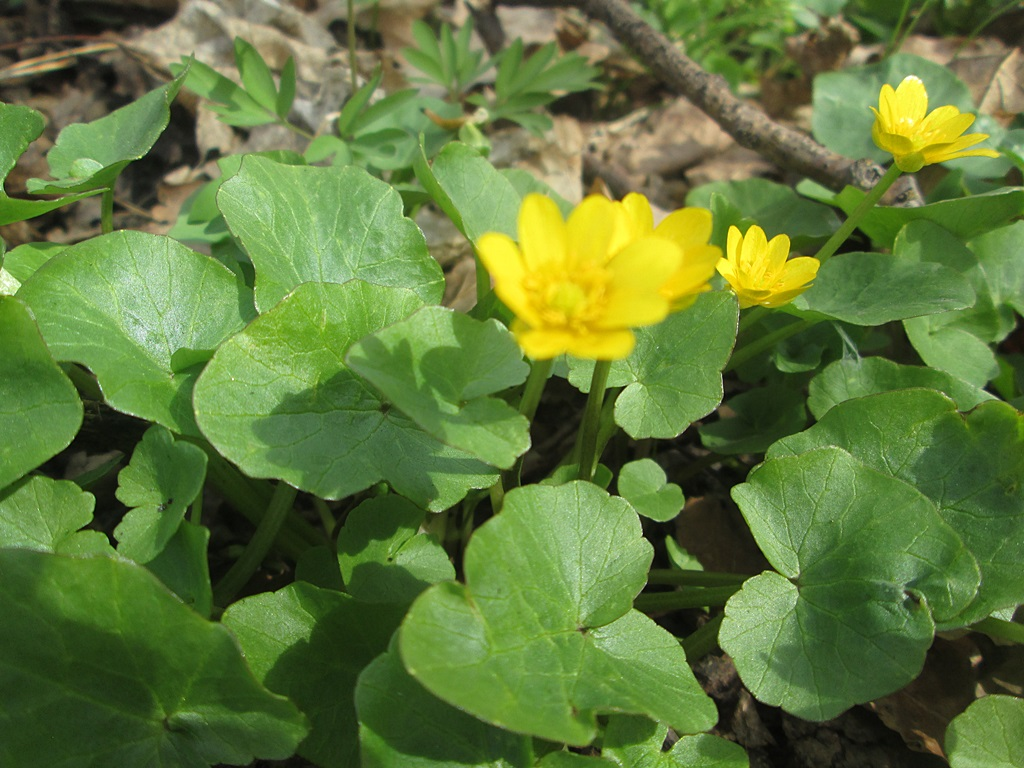 весенние цветы фото (5)