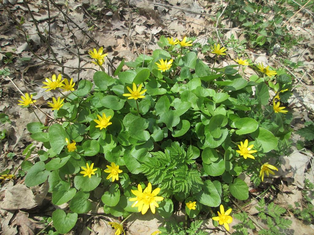 весенние цветы фото 6 (2)