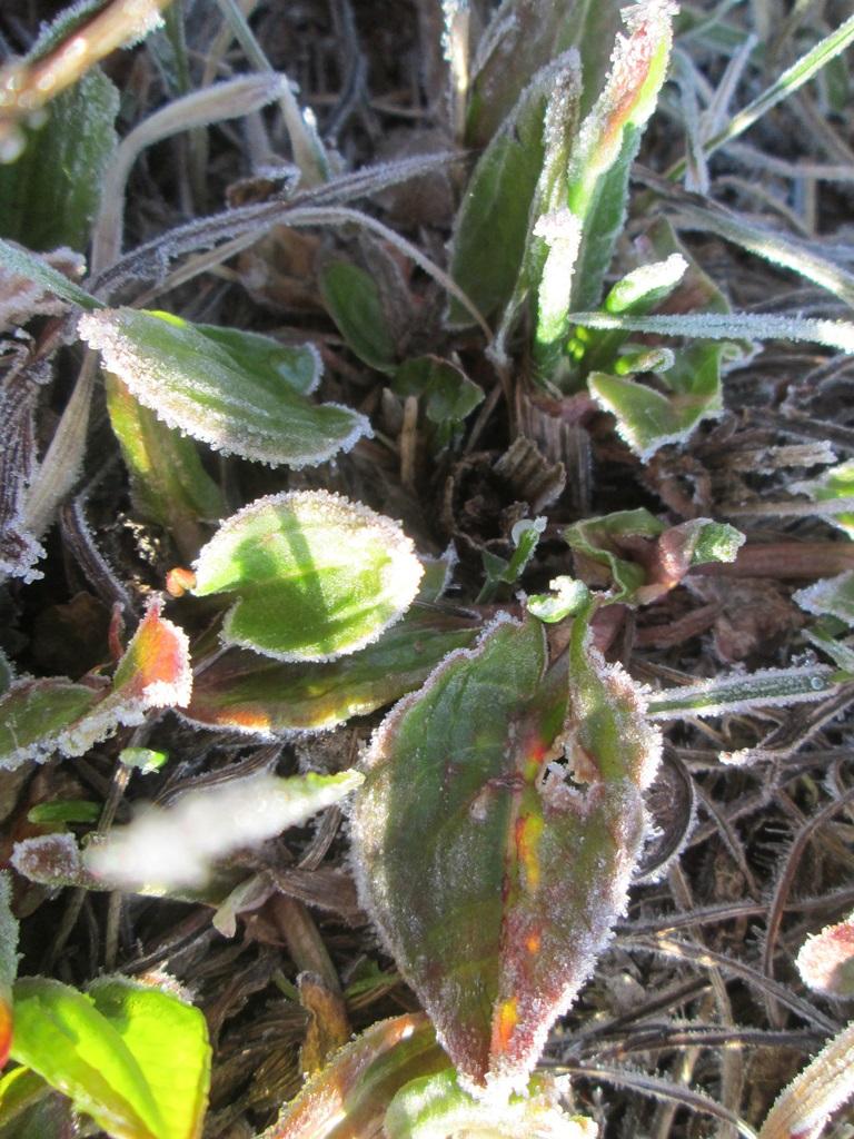изморозь, иней на траве, трава покрыта инеем фото (3)