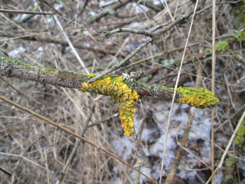 лишайник на деревьях фото (2)