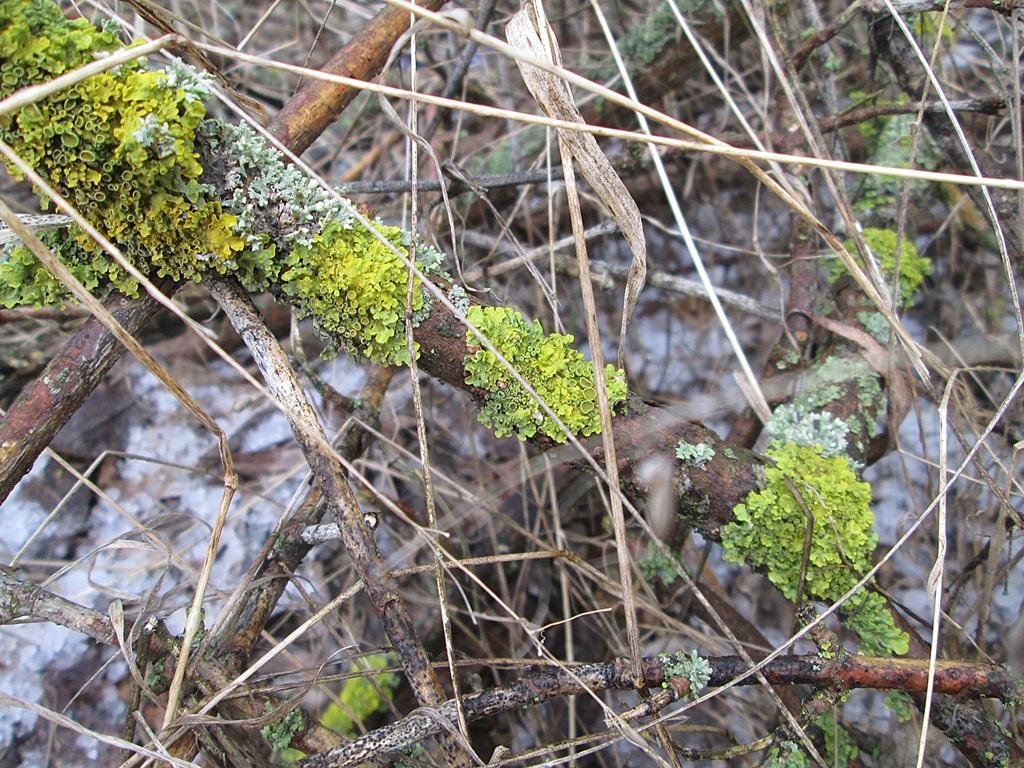 мох лишайник фото 1