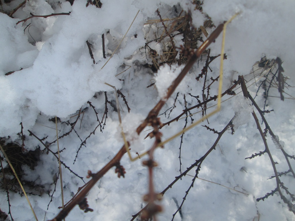 снег весной фото (108)