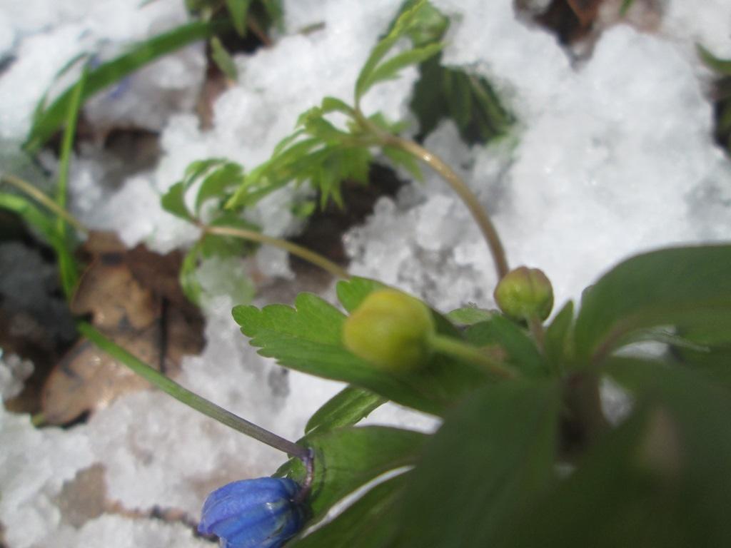 снег весной фото (117)