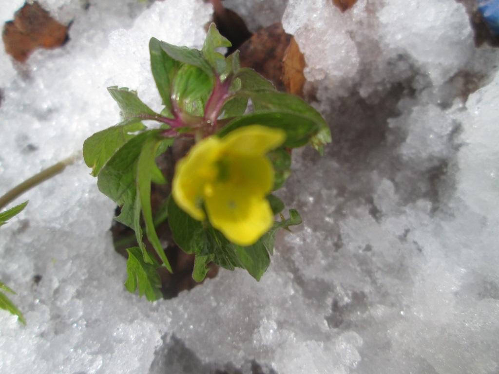 снег весной фото (118)