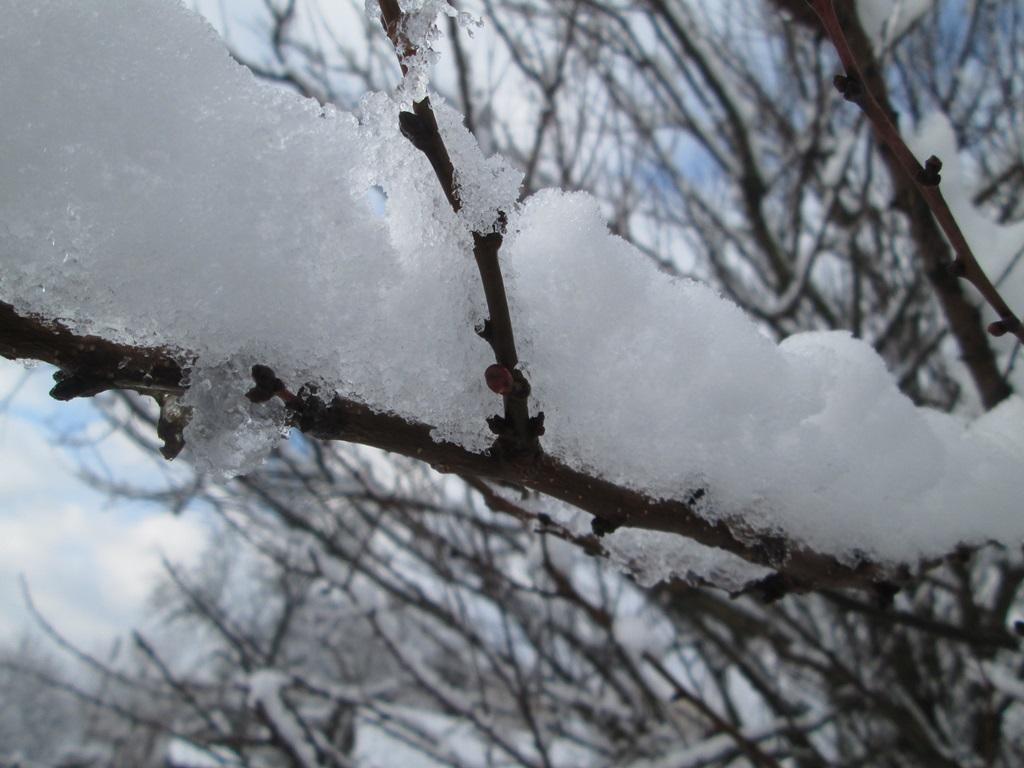 снег весной фото (12)