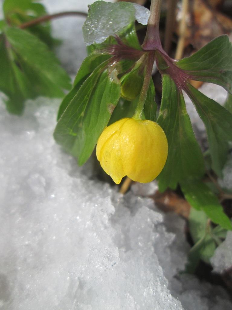 снег весной фото (120)
