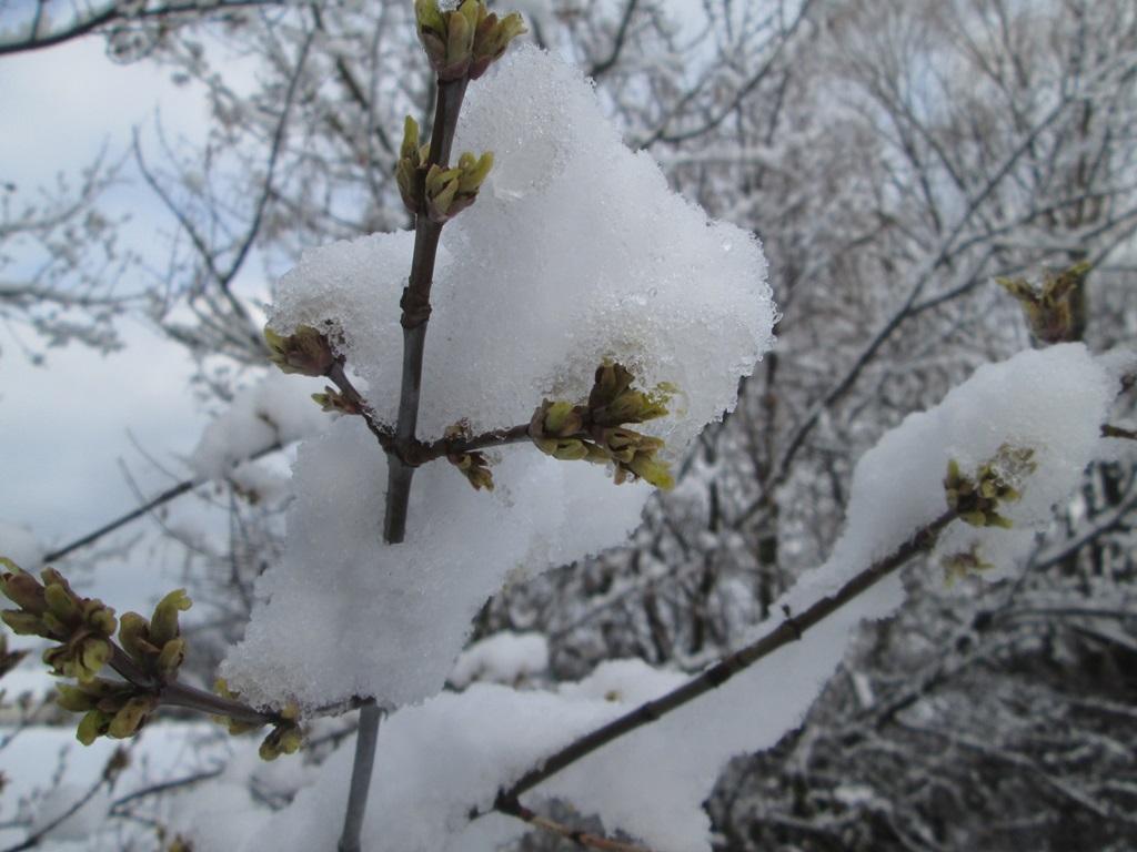 снег весной фото (21)