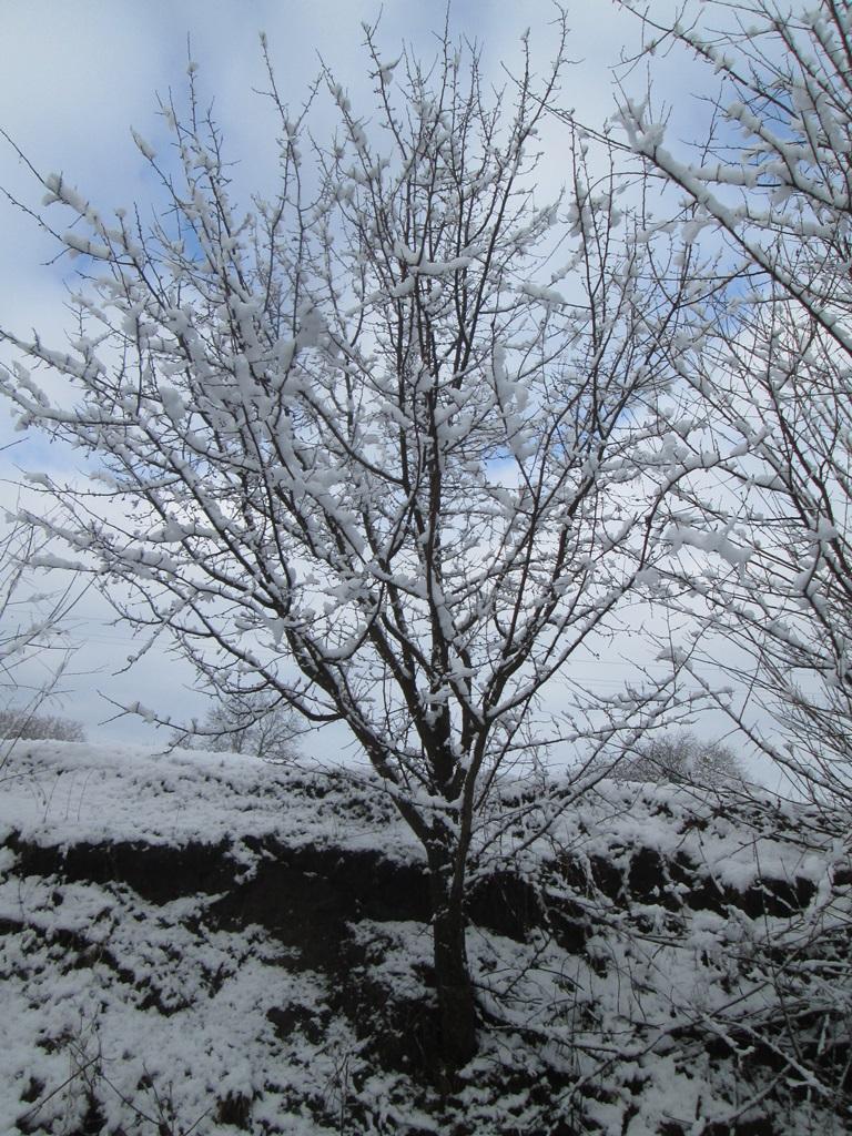 снег весной фото (23)