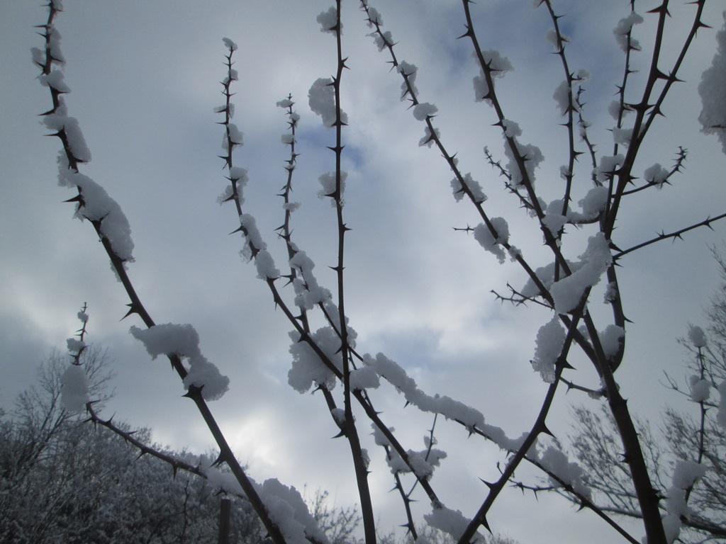 снег весной фото (32)