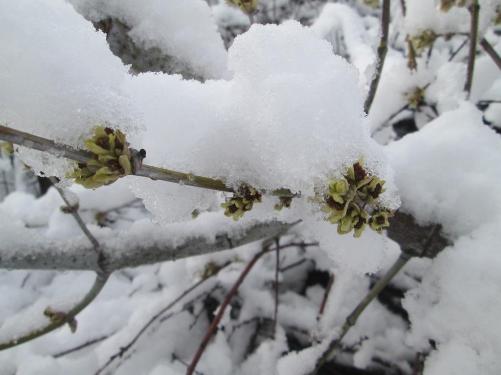 снег весной фото (5)