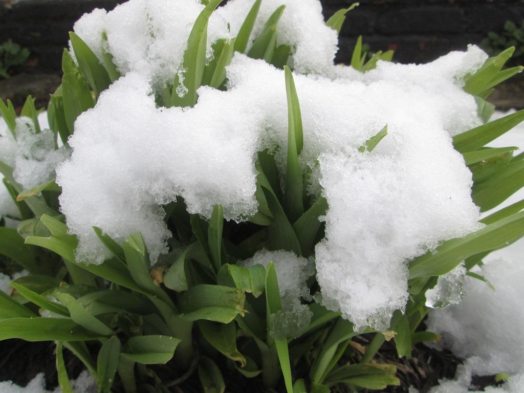 снег весной фото (60)