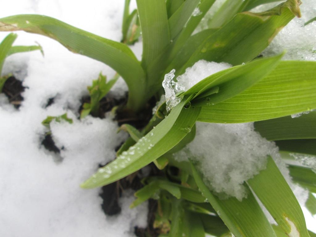 снег весной фото (62)