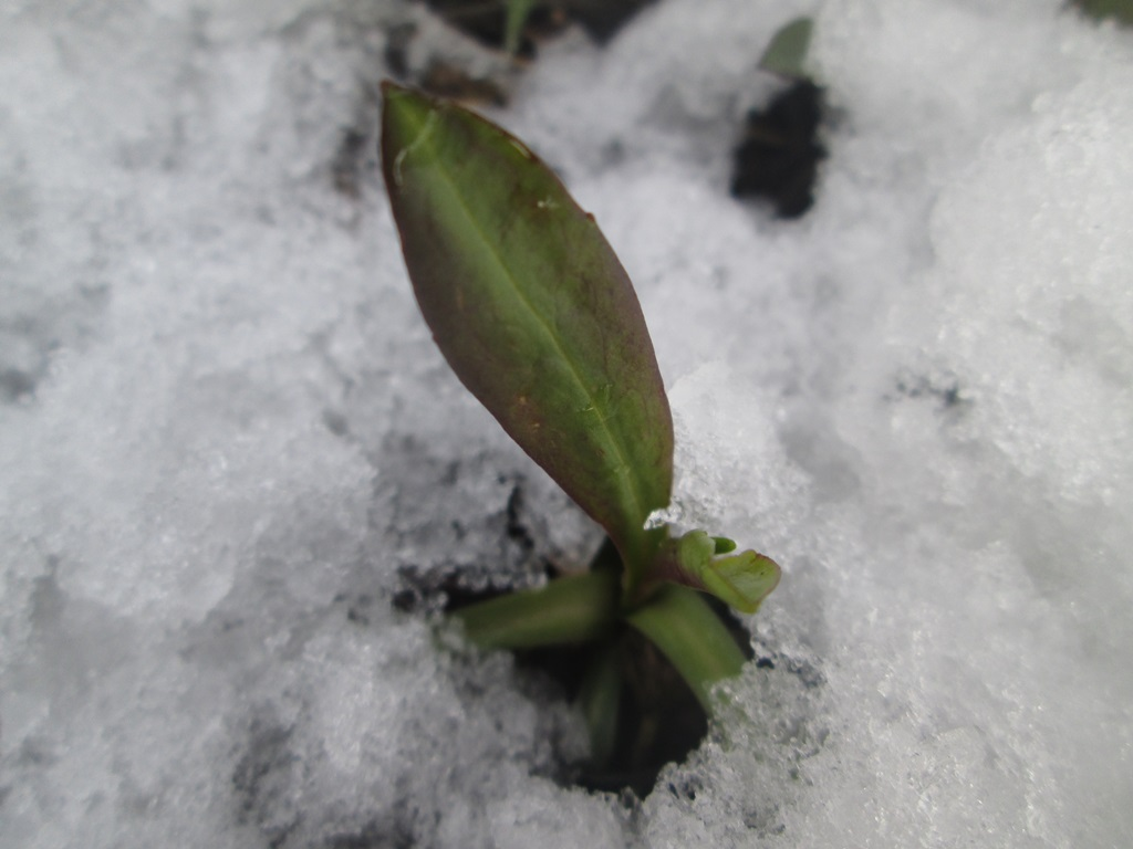 снег весной фото (70)