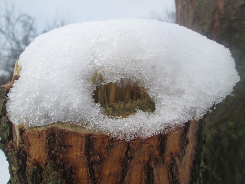 снег весной фото (90)