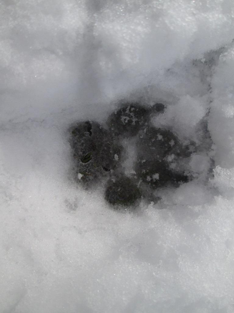 снег весной фото (94)