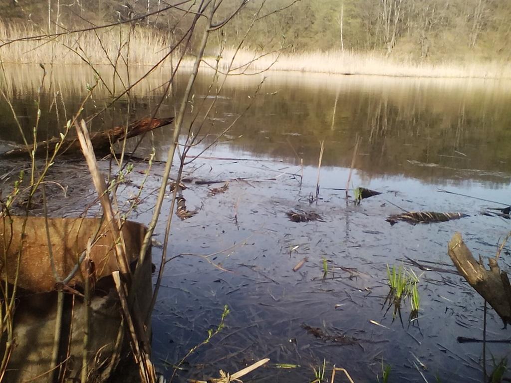 старый пруд - ставок в Рогах (5)