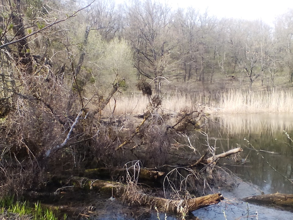 старый пруд фото - ставок в Рогах Гонцы (4)