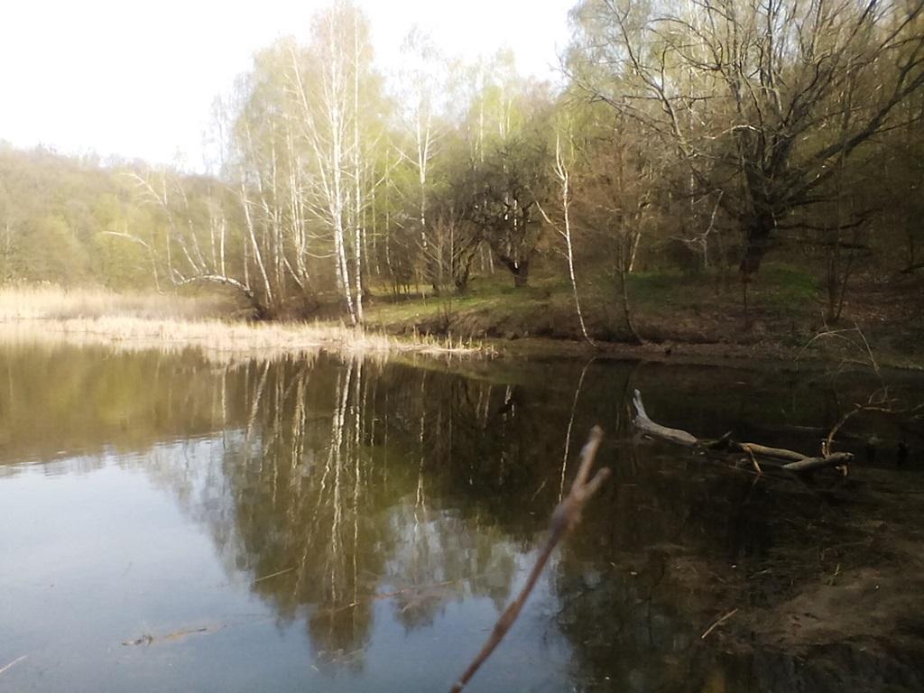 старый пруд фото - ставок в Рогах Гонцы (5)