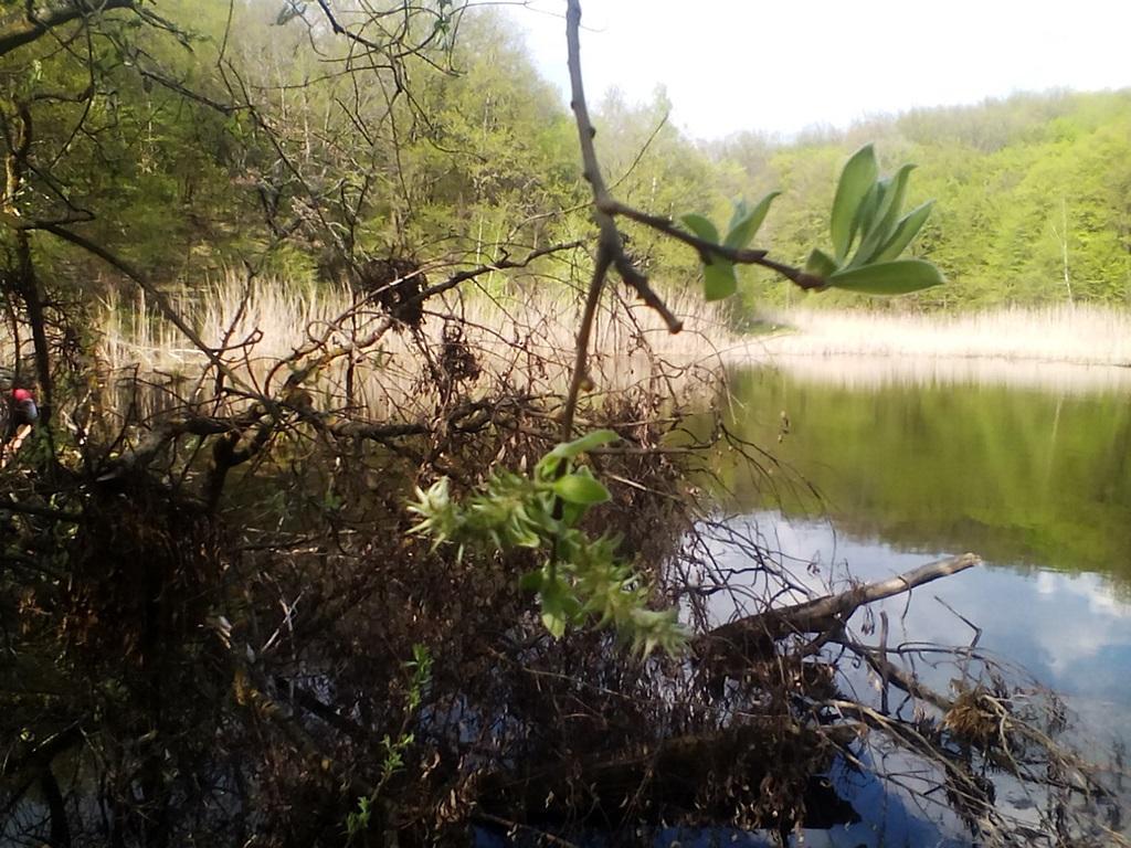 старый пруд фото - ставок в Рогах (2)