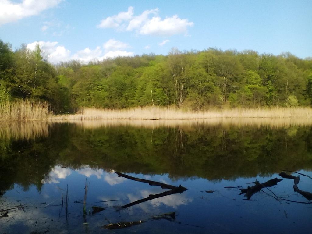 старый пруд фото (1)