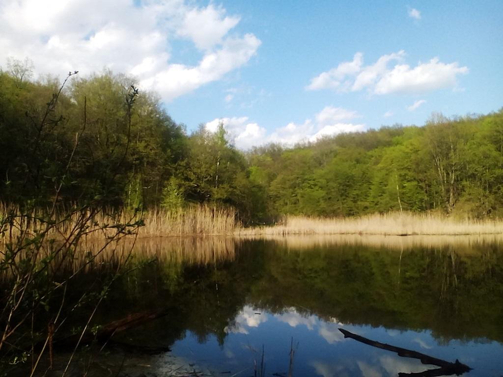 старый пруд фото (4)