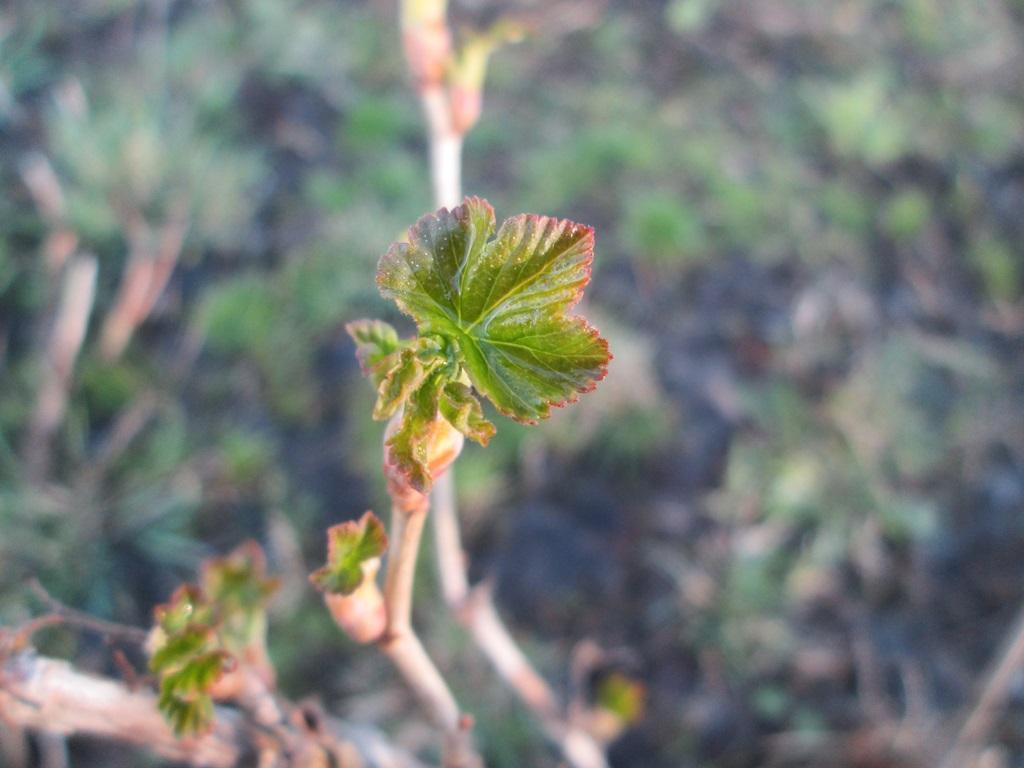 фото весна природа 1 (14)
