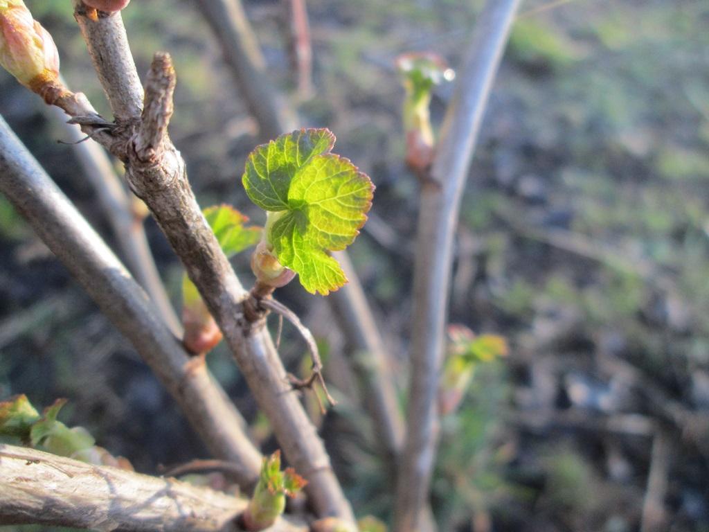 фото весна природа 1 (15)