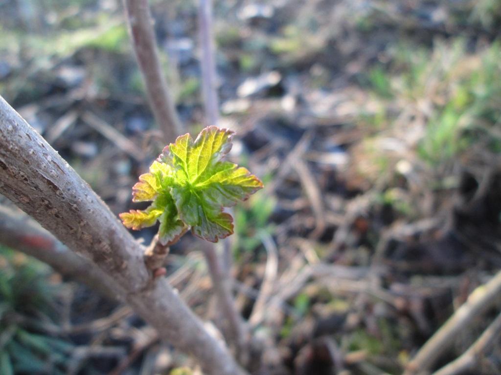 фото весна природа 1 (16)