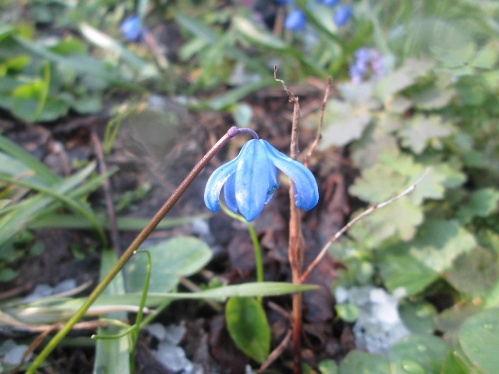фото весна природа 1 (2)