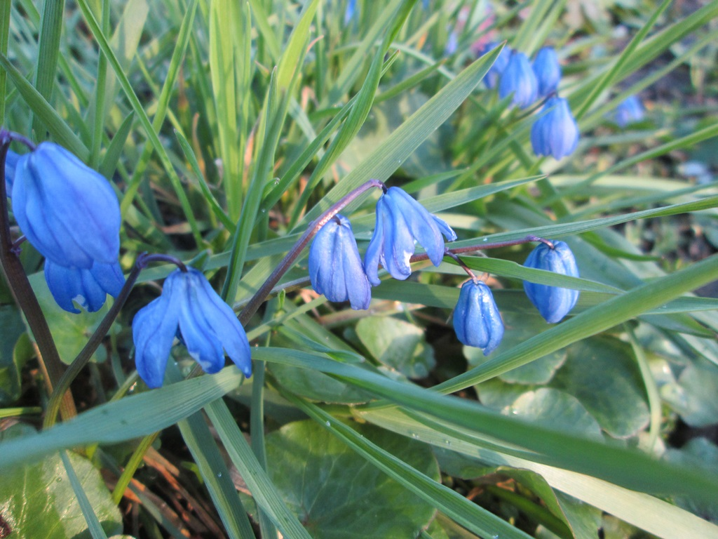фото весна природа 1 (20)