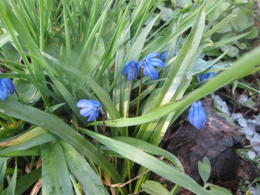 фото весна природа 1 (5)