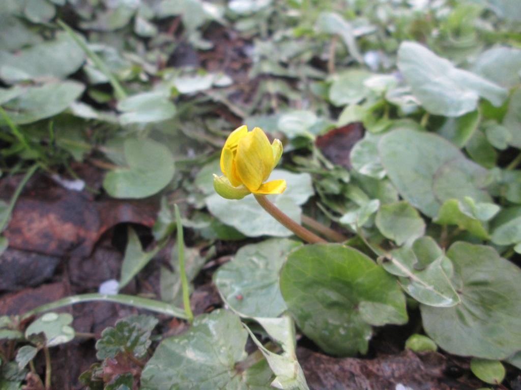 фото весна природа 1 (8)