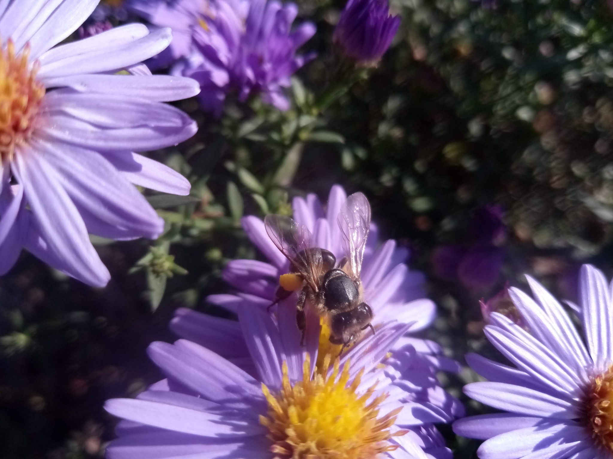 Bee on flowers photo