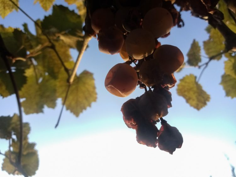 Amazing grape photos