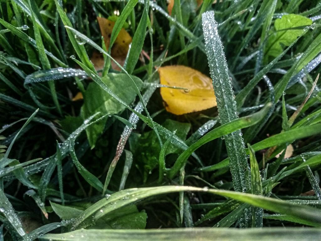 Dew drops photo 12
