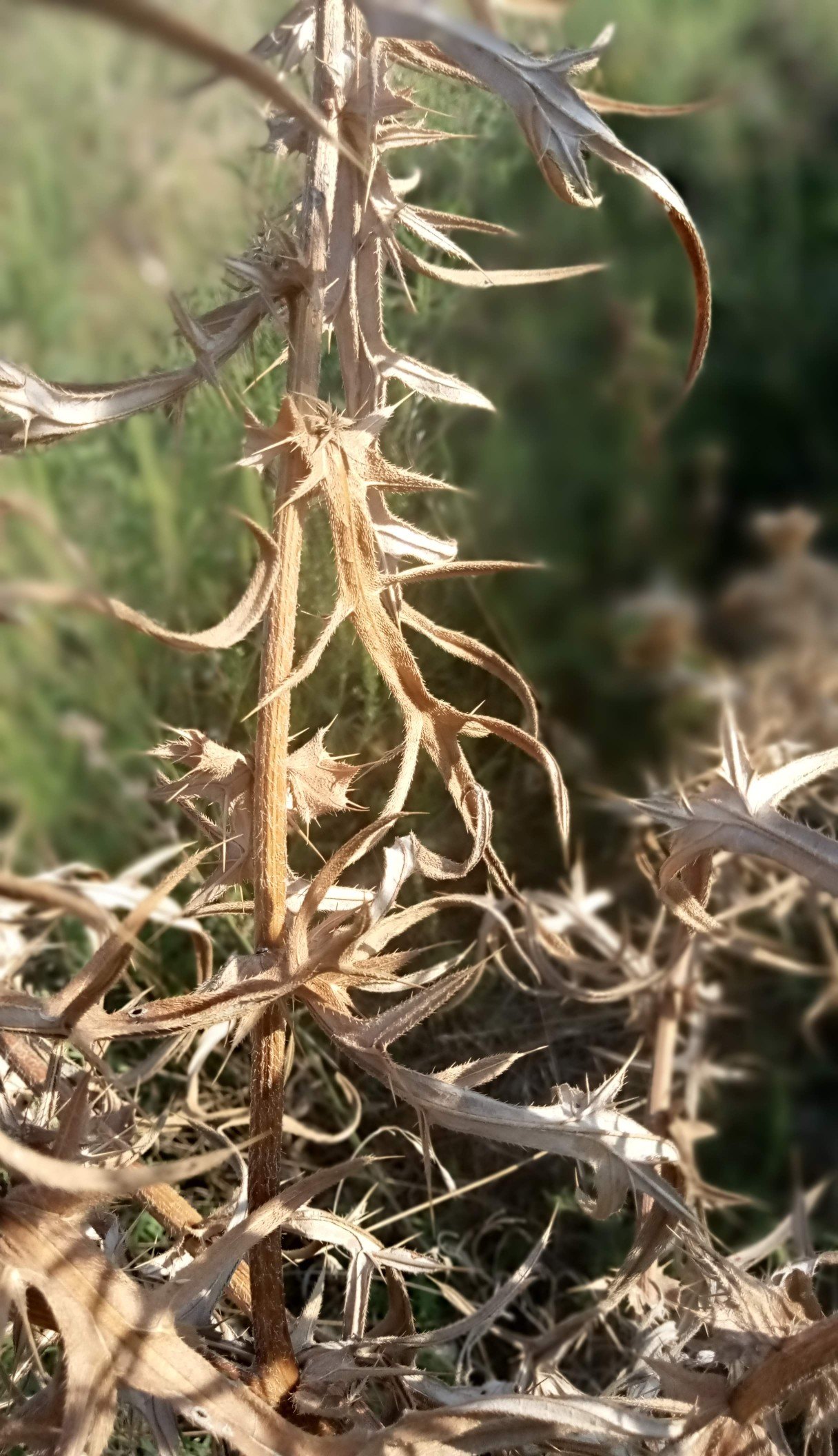 Dry autumn plants photo