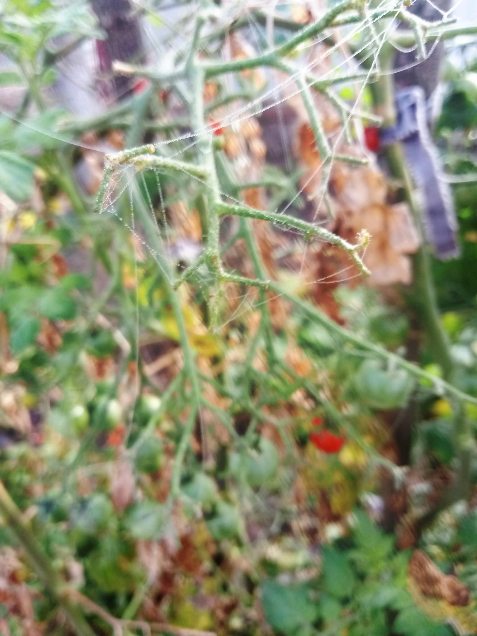 Spider web photo 7