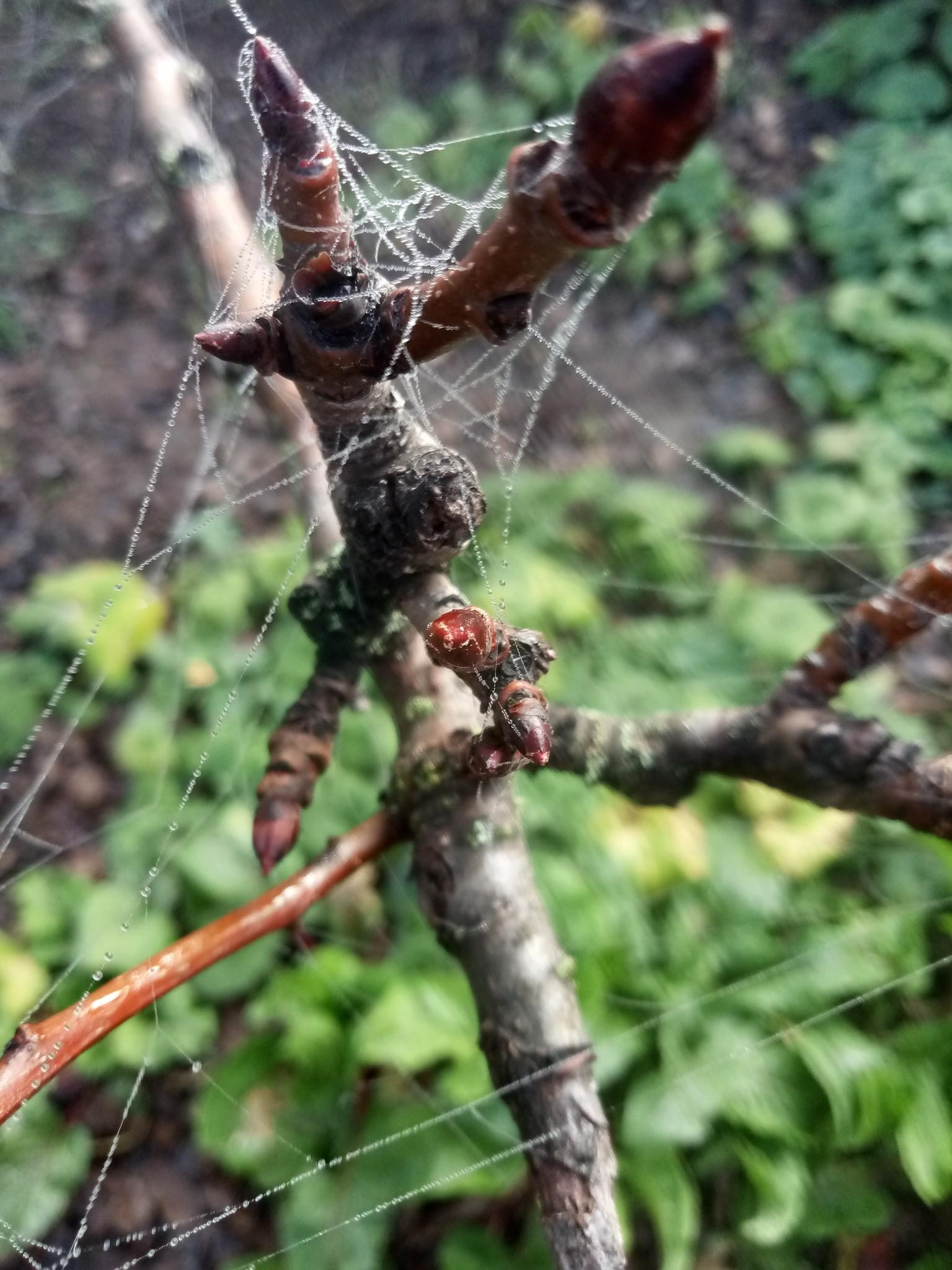 Spider web photo 5