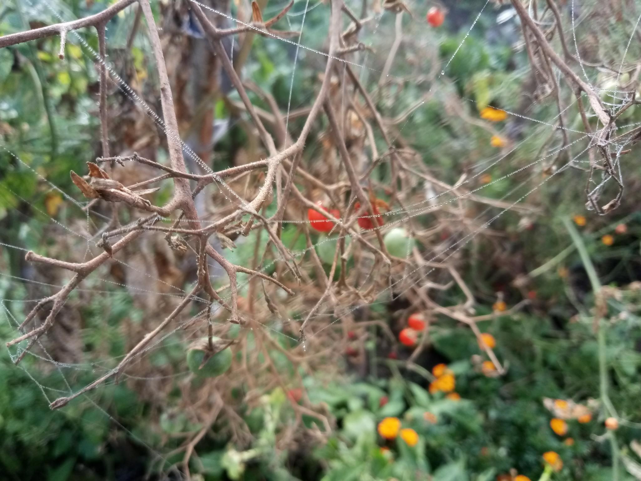 Spider web photo 3