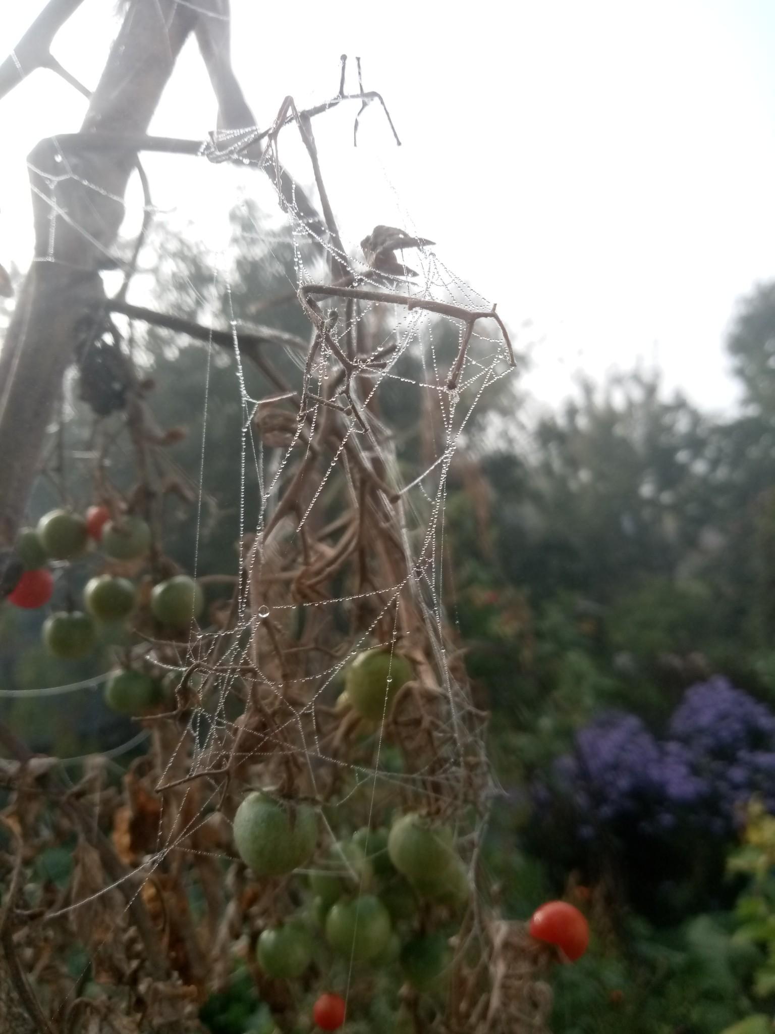 Spider web photo 1