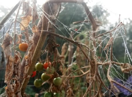 Spider web in fog photo 10
