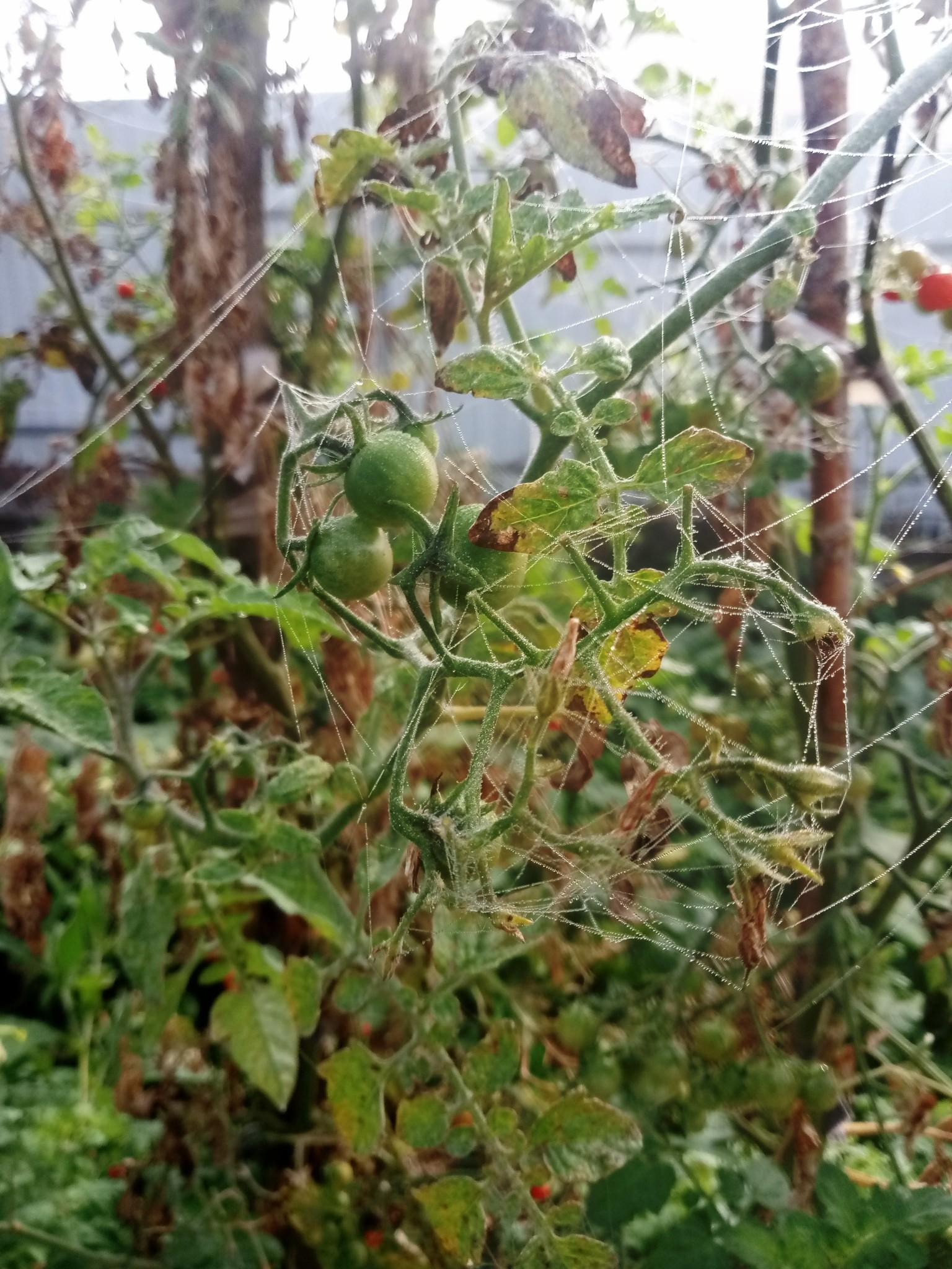 Spider web in fog photo 8
