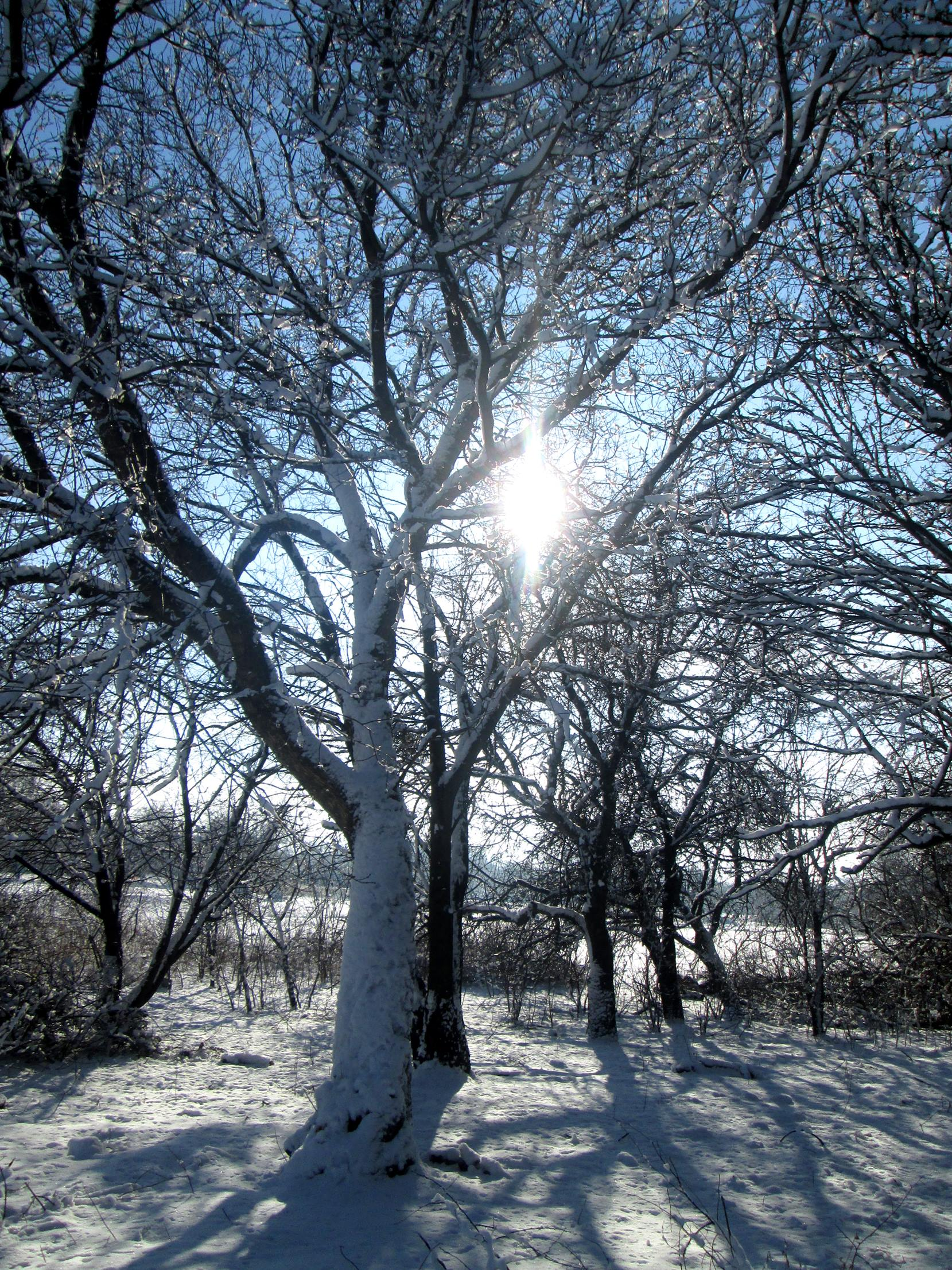 Winter trees photo 4