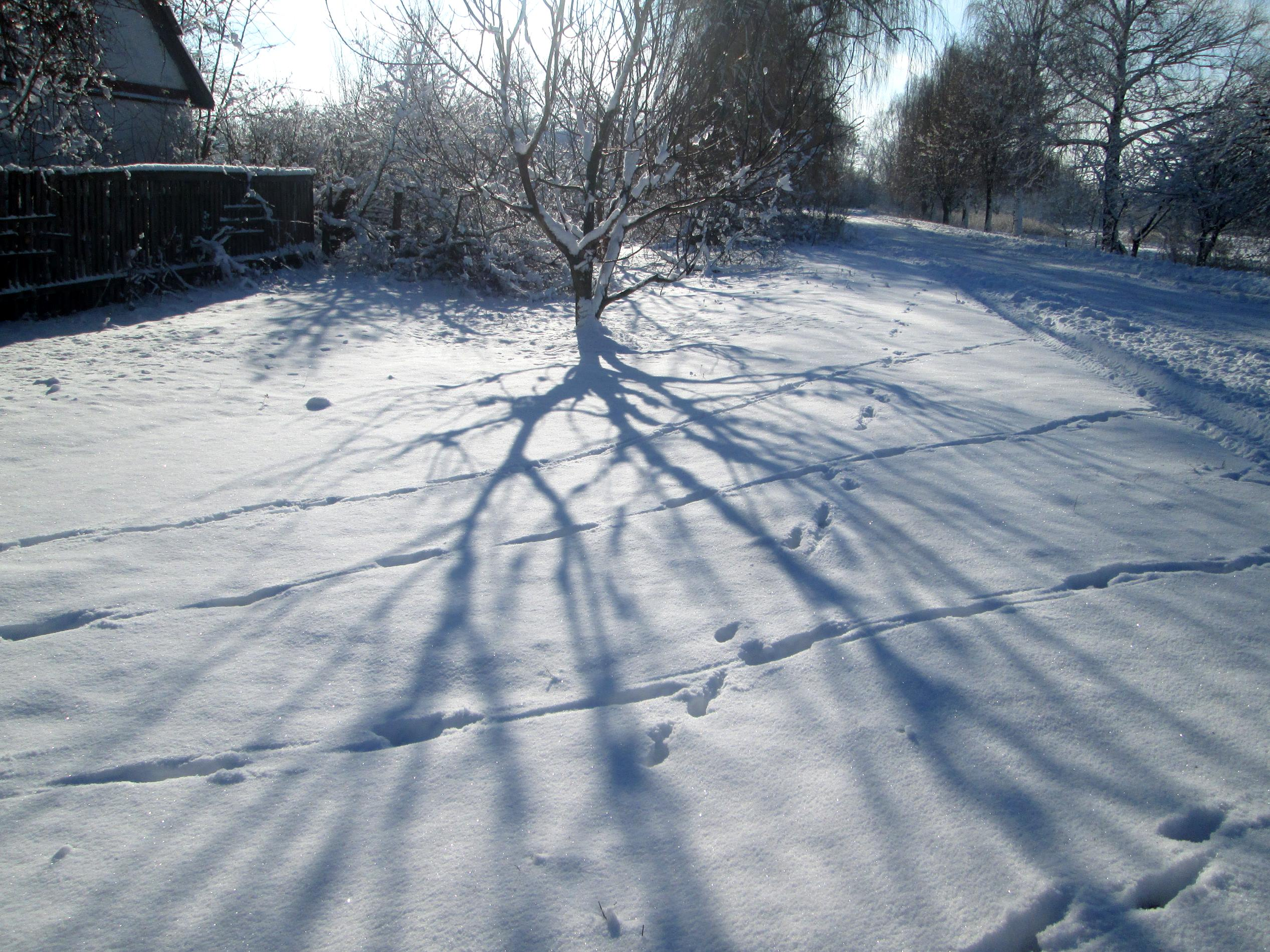 Winter in the village photo