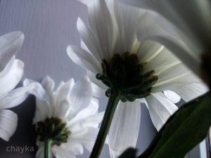 Spring white photos