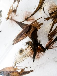 dried herbarium photo